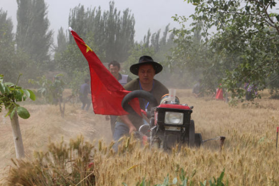 与队员一起奋力帮着苦难家庭收割小麦。